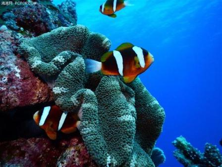 How to shoot good photos underwater